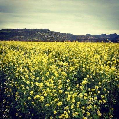 Honig Vineyard & Winery, United States, California