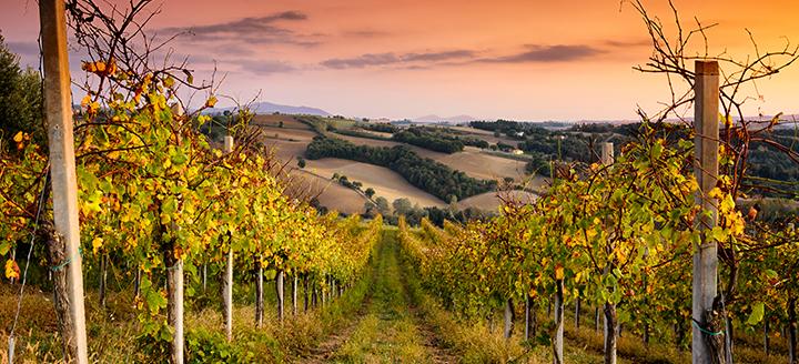 Antelope Valley Wineries