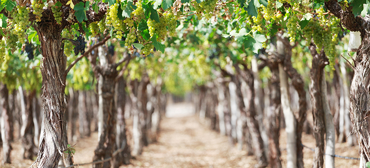 Arizona Winery Guide