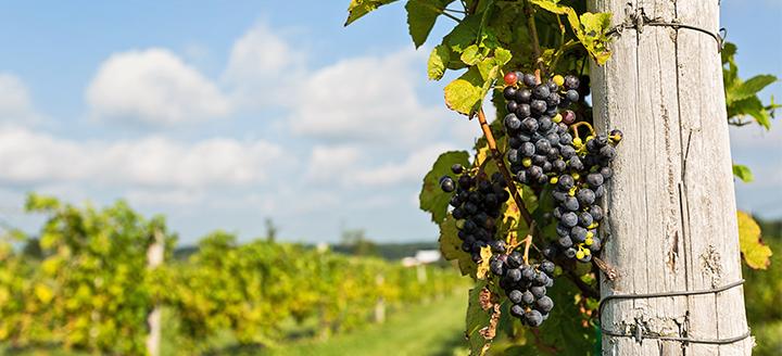Arroyo Seco Wineries