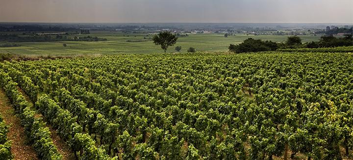 Austin Wineries