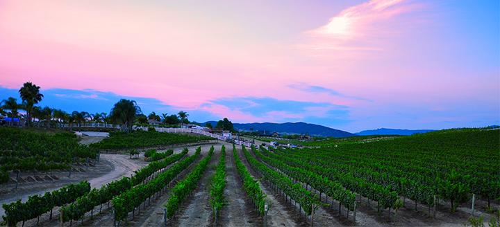 Best California Wineries