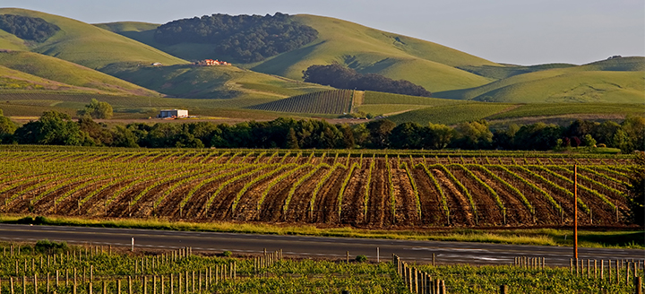 Best Napa Valley Wineries
