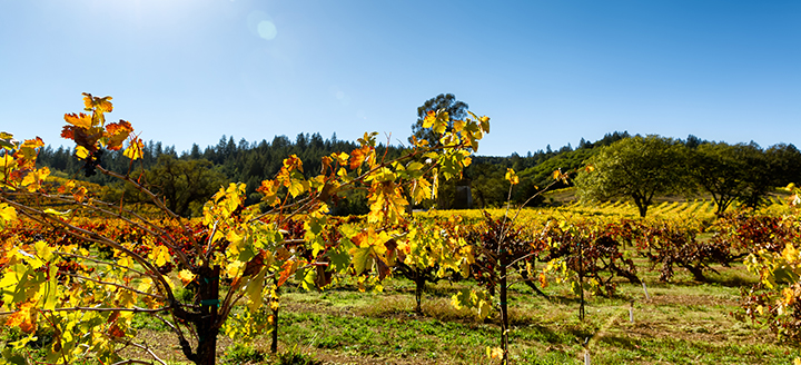 Best Oregon Wineries