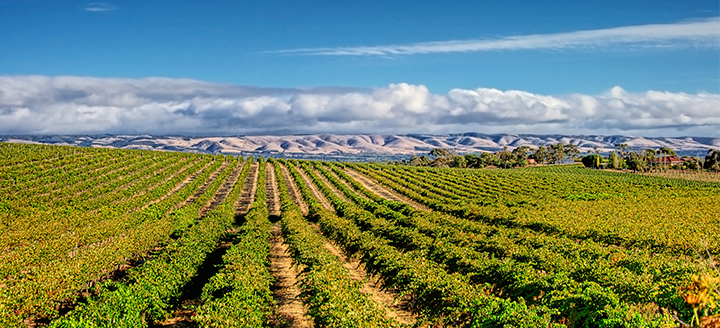 Best Sonoma Wineries