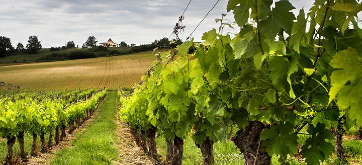 Best Walla Walla Wineries