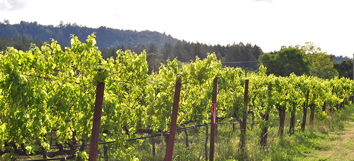 Best Wine Tasting Tours in Napa Valley