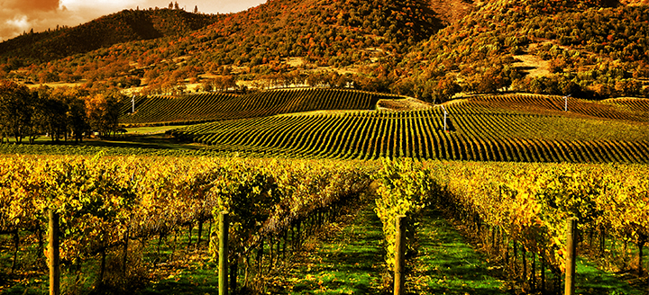 Best Wineries in Napa for Tasting