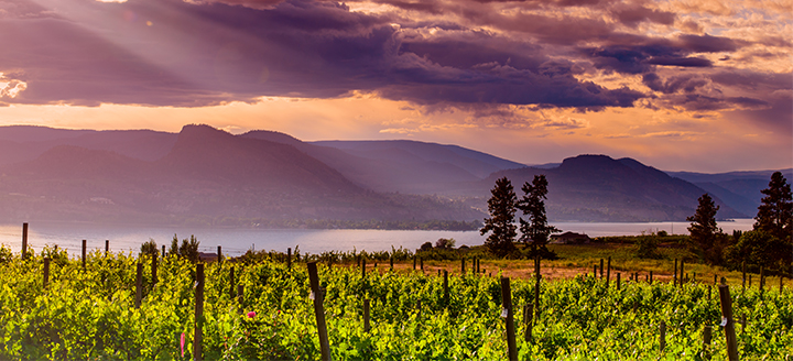 Columbia Valley Wineries
