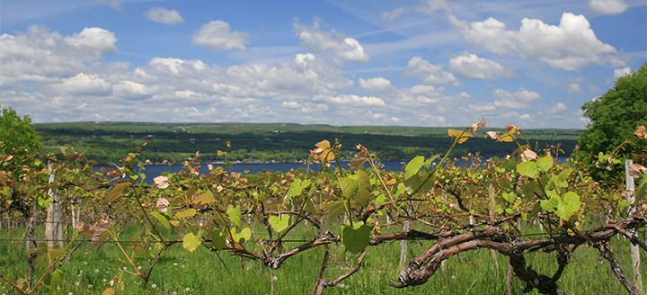Finger Lakes New York Wineries
