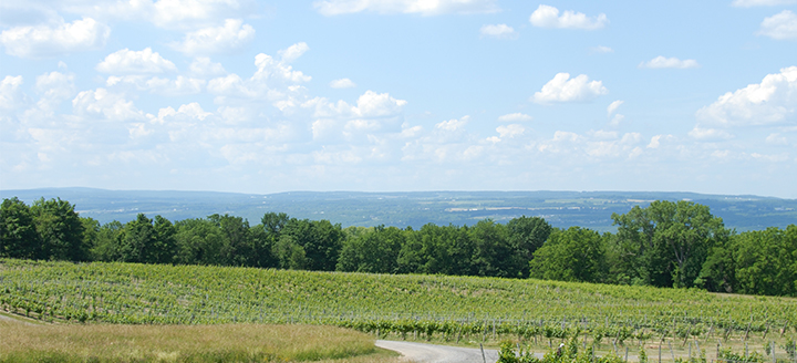 Finger Lakes Winery