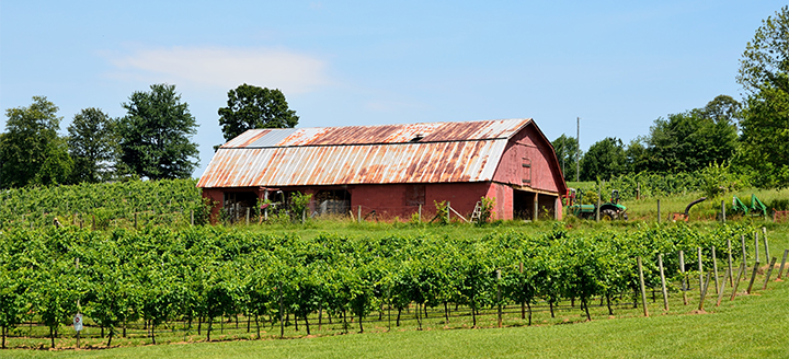 Georgia Wineries
