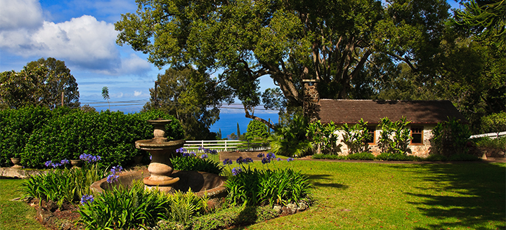 Hawaii Wineries