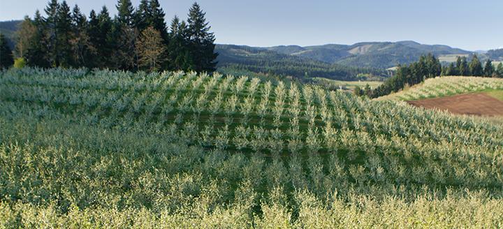 Hood River Oregon Wineries