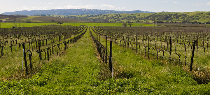 Livermore Valley Wine Tours
