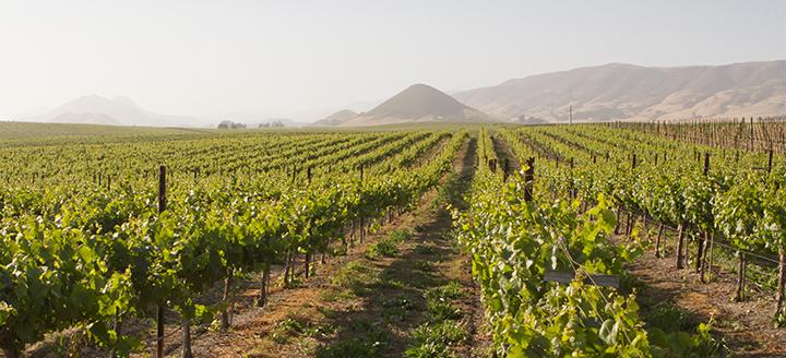 Malibu Coast Wineries