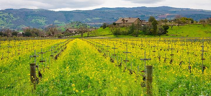 Malibu-Newton Canyon Wineries