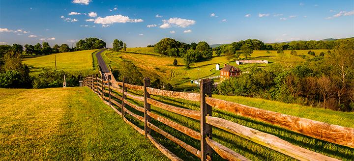 Maryland Vineyards