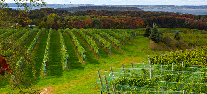 Michigan Wineries