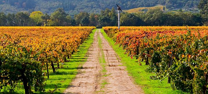 Napa Valley Free Wine Tasting