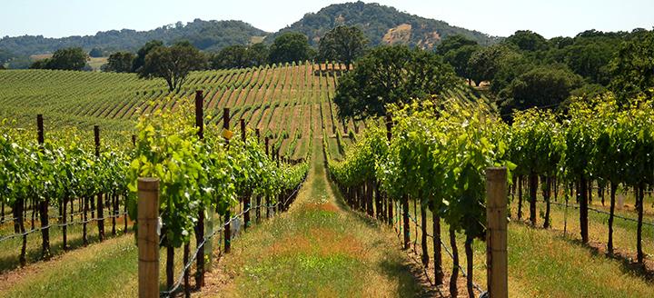 Napa Valley Wine Train Reviews