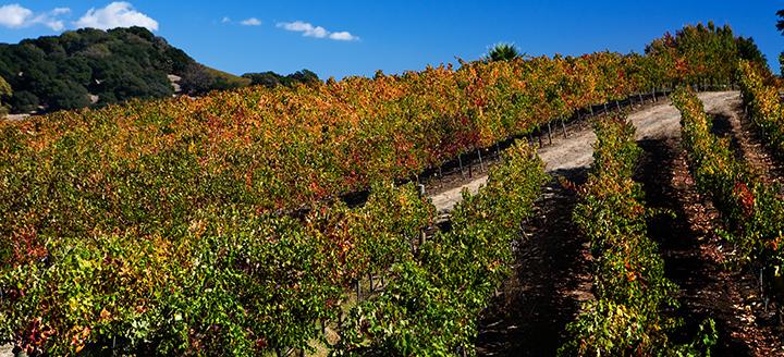 Napa Wine Tasting Itinerary