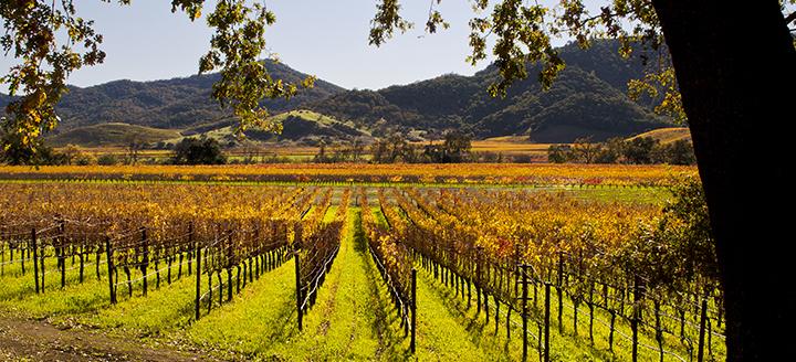 Top Vineyards in Napa