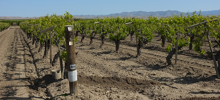 Nevada Wine Makers