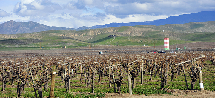 Nevada Wineries Guide