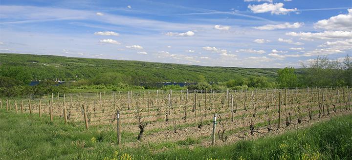 New Jersey Vineyards