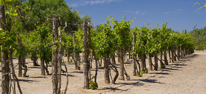 Wineries in New Mexico
