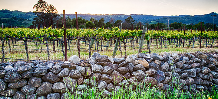 Northern Sonoma Wineries