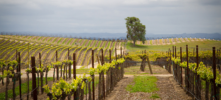 Paso Robles Highlands District Wineries