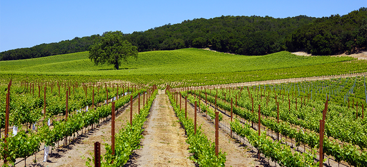 Paso Robles Wine Tastings