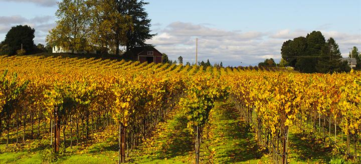 Santa Rosa Wineries