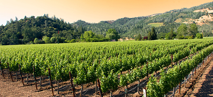 Solano County Wineries