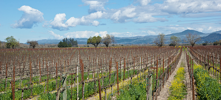 Sonoma Wineries Requiring Reservations