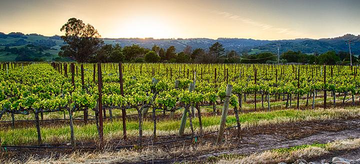 Sonoma Mountain Wineries