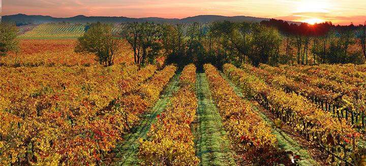 Sonoma Wineries