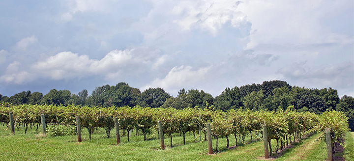 South Carolina Wineries