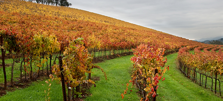 Southern California Wineries