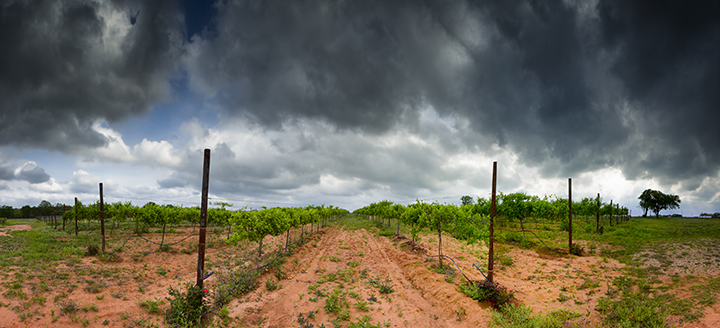 Texas Wineries