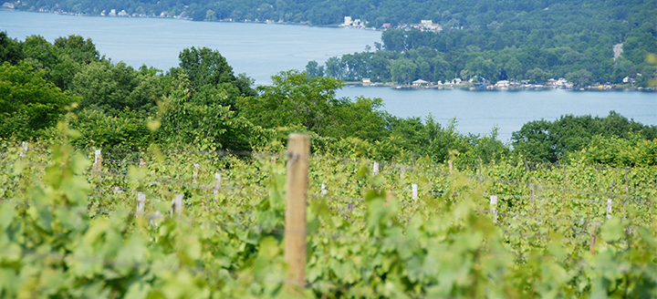 Upstate New York Wineries