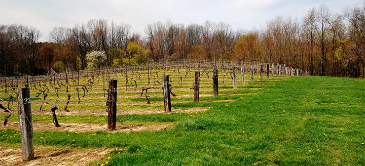 Wine Tasting in Michigan