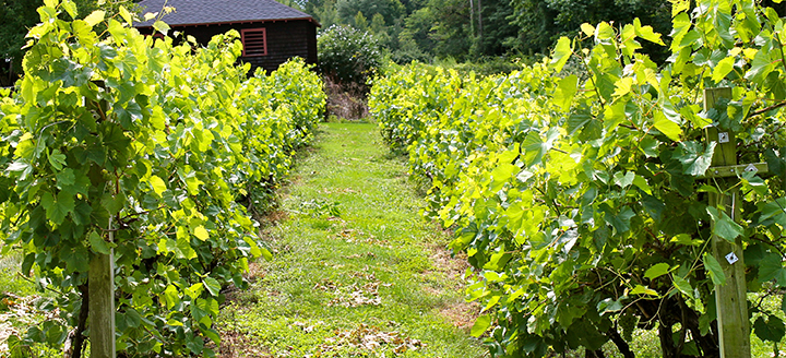 Wineries in Connecticut