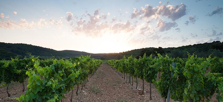 Wineries in Lodi CA