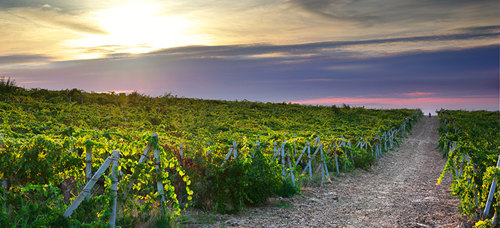 Wineries in Monterey