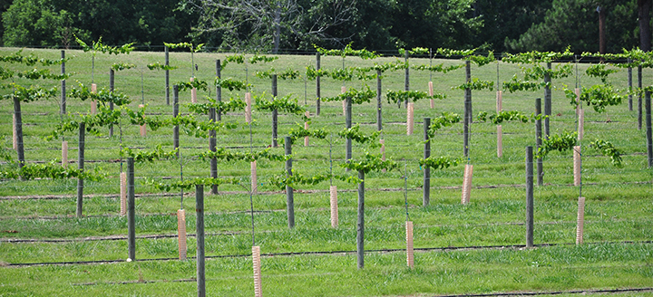 Wineries in North Carolina