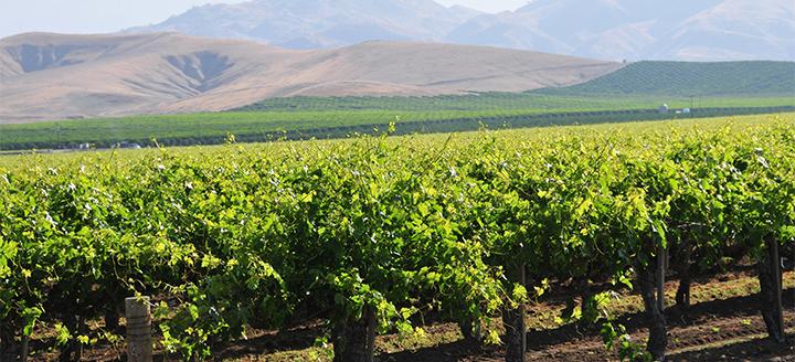 Wineries in Sierra Foothills