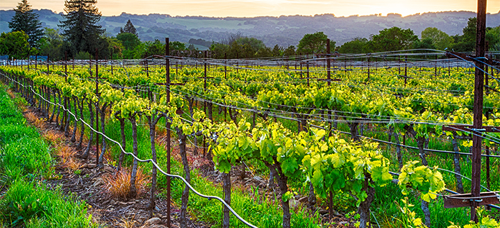 Wineries in Southern California
